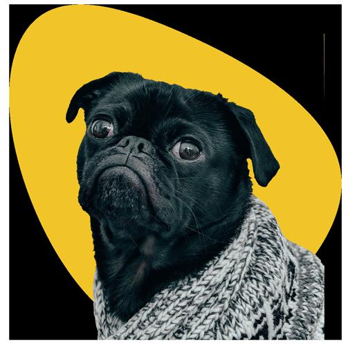 01-manual-pet-cachorro-ola-humanos